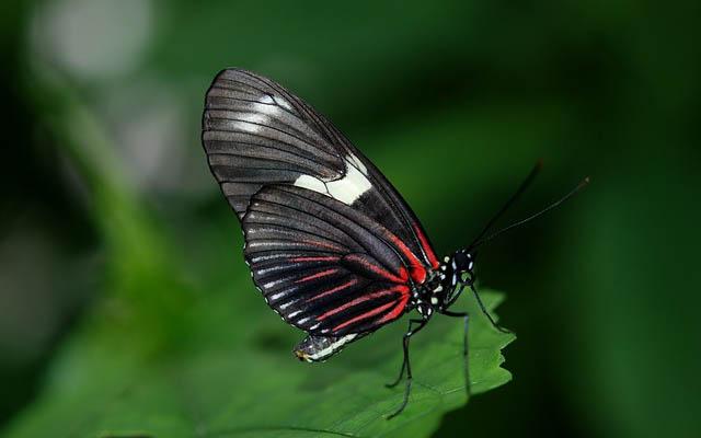 vlinder 4